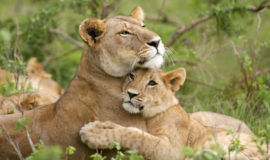Combined Kenya and Tanzania Safari